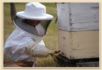 Honey Beekeeper